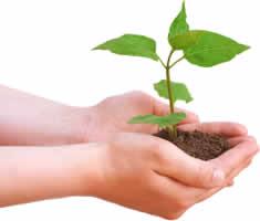 environmentally_friendly
